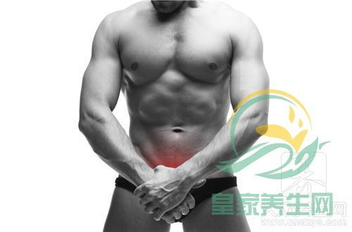 人体前列腺在哪个部位 皇家养生网